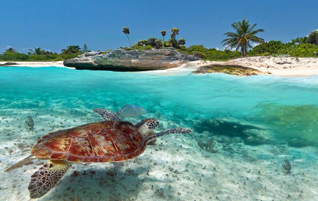 Las tortugas son inofensivas, por lo que se puede nadar junto a ellas.
