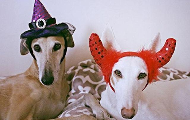 Las fotos más insólitas de Halloween.