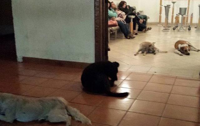 Cuidó toda su vida de perros callejeros y fueron al funeral