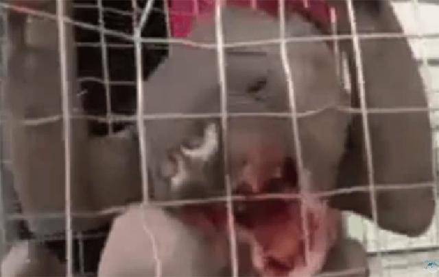 Extraña criatura capturada en China
