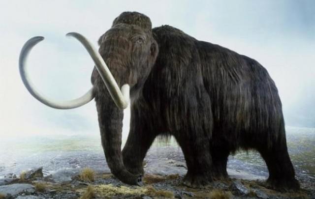 Planean clonar a un mamut.