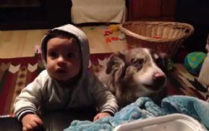 Un perro dice mamá para poder ganar comida.