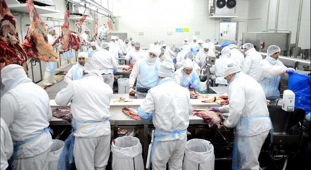 FOTO: se prevé que este año la exportación crezca entre un 10 y un 20%.