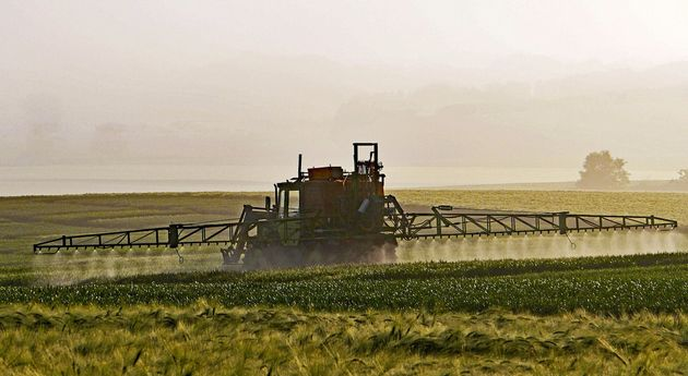 FOTO: Las cadenas de cultivos promueven la sostenibilidad y el cuidado del medio ambiente