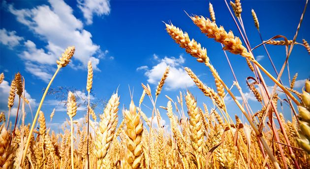 VIDEO: Gonzalo Agusto, habló sobre la situación del trigo en el marco de Trigar 2019