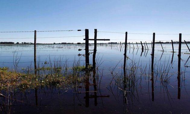 FOTO: Las pérdidas de Chaco impactan en la cosecha de soja.