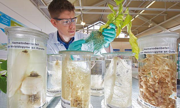 FOTO: Bayer apunta a reducir el impacto ambiental en un 30%.