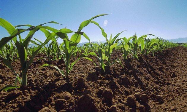 FOTO: Córdoba es pionera en la conservación de suelos.