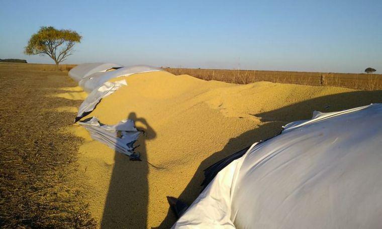 AUDIO: Productor agropecuario Jorge Bisio, víctima de robo de 23 mil kilos de soja.