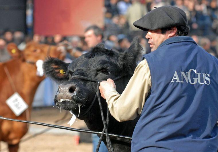 VIDEO: Alfredo Gusmán, presidente de la Asociación Argentina de Angus.