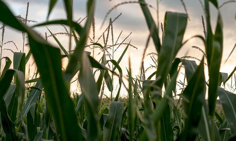 AUDIO: Santiago Álvarez, Bolsa de Cereales de Córdoba