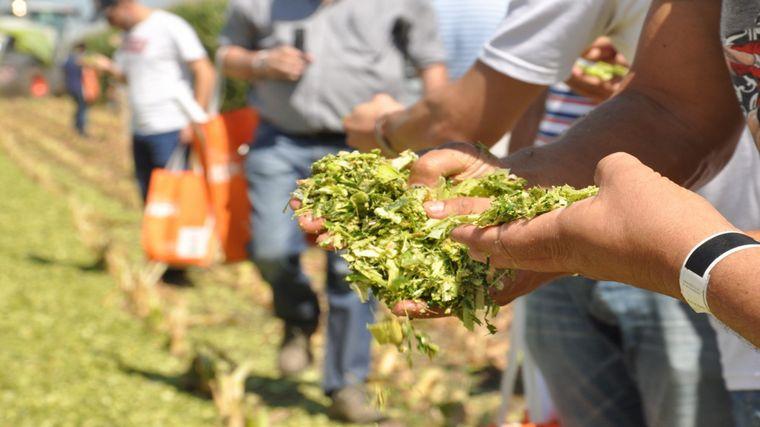AUDIO: Fernando Guerra, coordinador de servicios agronómicos KWS
