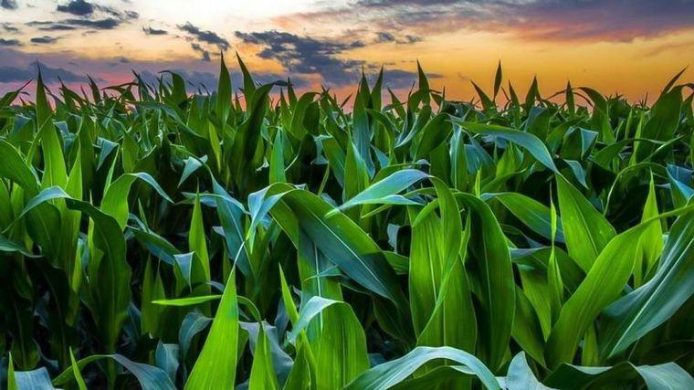 Informe agronómico