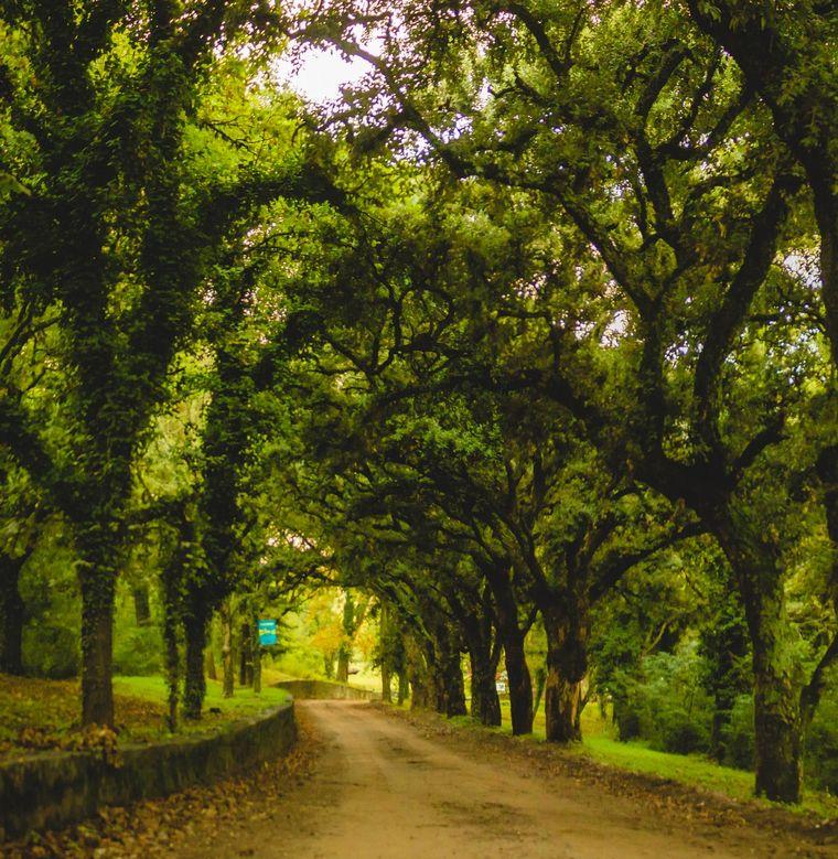 FOTO: Villa Giardino