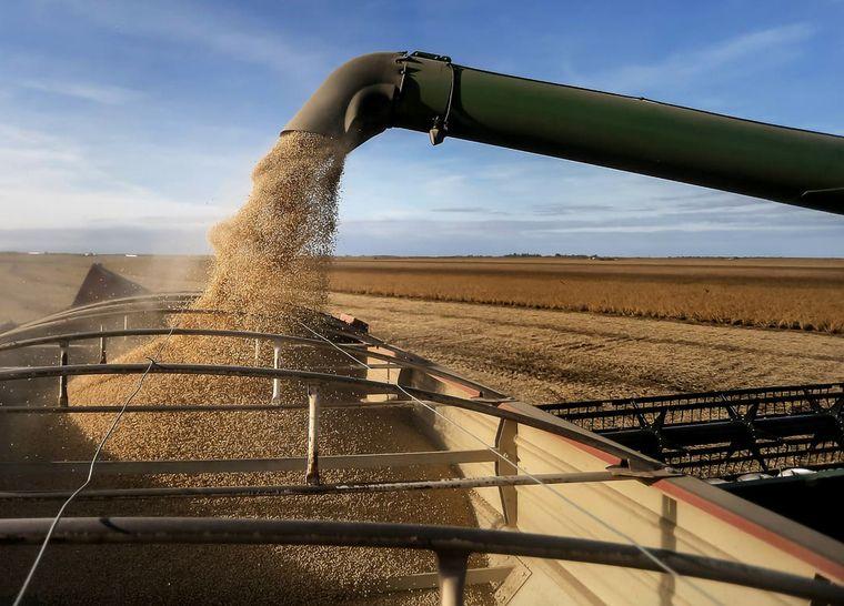 FOTO: El volumen esperado de maíz es de 19,18 millones de toneladas.