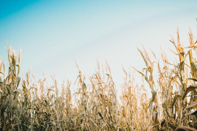 AUDIO: Betina Bourges, Bolsa de Cereales de Córdoba