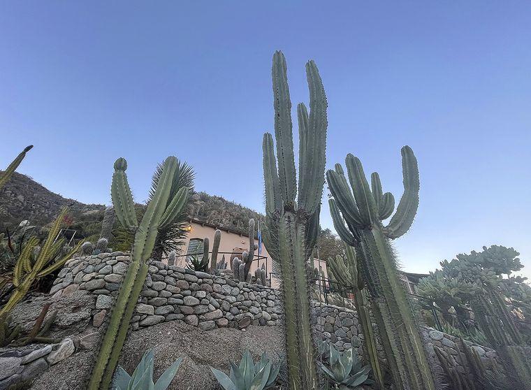 VIDEO: Botánico de Chilecito en La Rioja