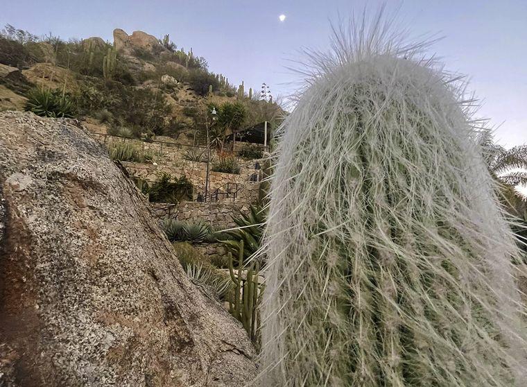 FOTO: cactus chilecito