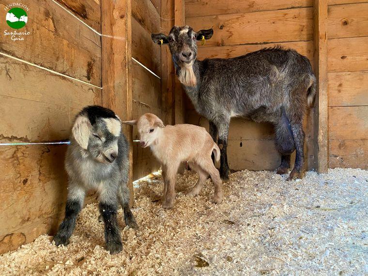 FOTO: Conmovedor rescate a animales se volvió viral en las redes