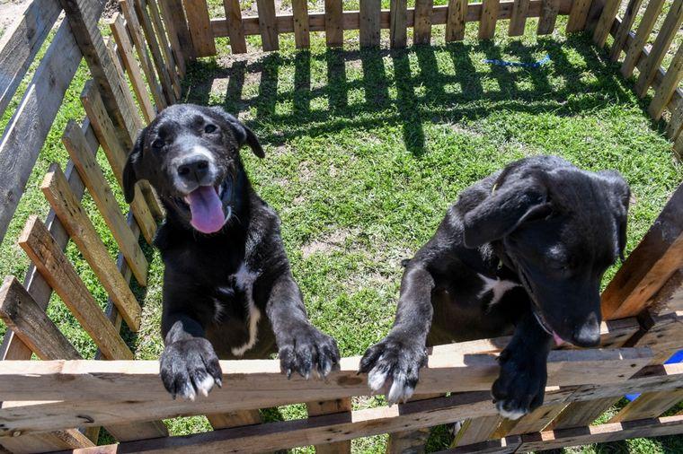 FOTO: Una cárcel bonaerense capacita internos en el adiestramiento de perro de asistencia